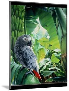 African Grey Parrot, 1990 by Sandra Lawrence