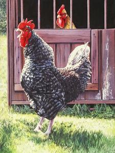 Blatant Provocation, 2004 by Sandra Lawrence