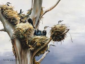 Cormorants- Lake Naivasha, 1984 by Sandra Lawrence