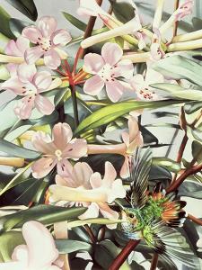 Humming Bird, 1989 by Sandra Lawrence