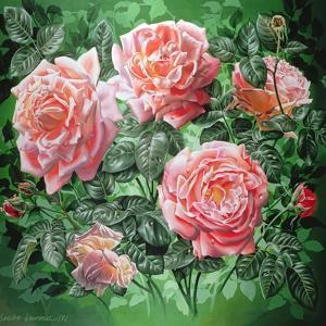 Hybrid Tea- Lyon Rose, 1982 by Sandra Lawrence