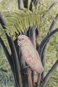 Salmon-crested Cockatoo, 1988 by Sandra Lawrence