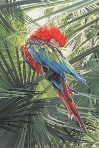 Scarlet Macaw, 1989 by Sandra Lawrence