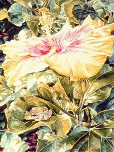 Tree Frog and White, Yellow and Pink Hibiscus, 1989 by Sandra Lawrence