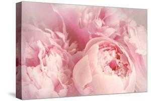 Closeup of Peony Flowers by Sandralise
