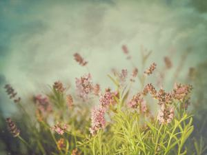 Lavender Flowers with Vintage Color Filters by Sandralise