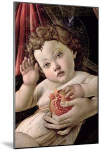 Detail of the Child with Pomegranate from the Madonna Della Melagrana by Sandro Botticelli