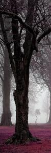 Alone Tree 1 by Sandro de Carvalho