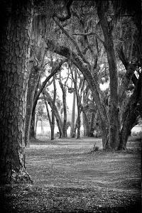 Into The Woods by Sandro de Carvalho