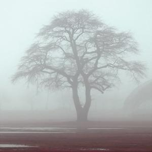 Red Fog by Sandro De Carvalho