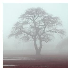 Red Fog by Sandro De Carvalho