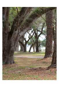 Serenity Park by Sandro De Carvalho