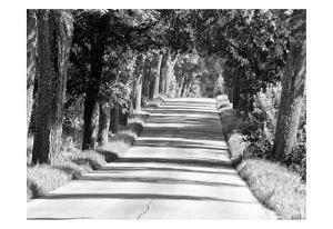 Sunday Drive 2 by Sandro De Carvalho