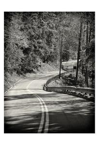 The Bend by Sandro De Carvalho
