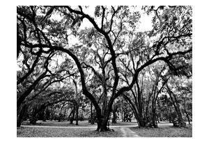 Woodlands by Sandro De Carvalho