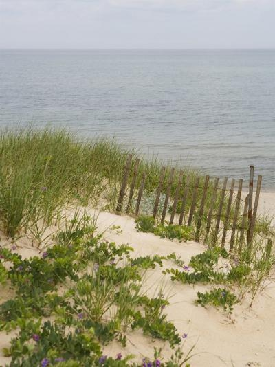 Sandy Dune with Vetch and Grasses--Photo