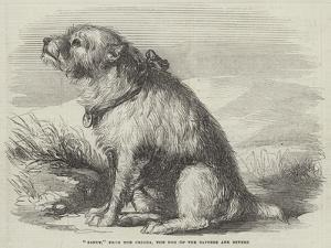 Sandy, from the Crimea, the Dog of the Sappers and Miners