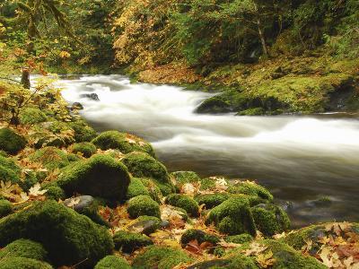 Sandy River in Autumn, Welches, Oregon, USA-Michel Hersen-Photographic Print