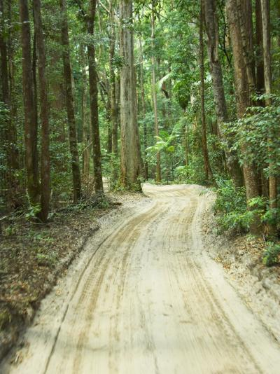 Sandy Road, Fraser Island, Queensland, Australia-David Wall-Photographic Print