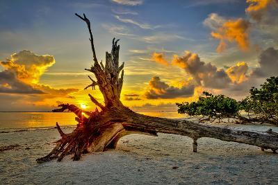Sanibel Sunrise-Dennis Goodman-Photographic Print