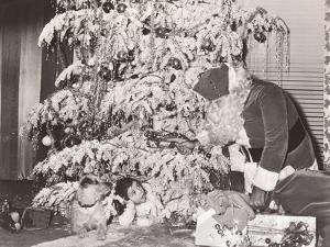 Santa Claus Discovers Little Girl and Her Dog under Christmas Tree