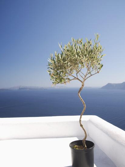 Santorini, Cyclades, Greek Islands, Greece, Europe-Angelo Cavalli-Photographic Print