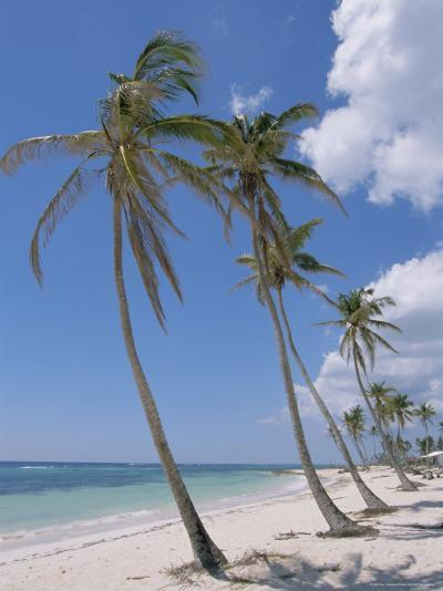 Saona Island, South Coast, Dominican Republic, Central America-Guy Thouvenin-Photographic Print