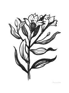 Ink Flower I by Sara Zieve Miller