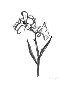 Ink Flower II by Sara Zieve Miller