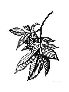 Ink Leaves by Sara Zieve Miller