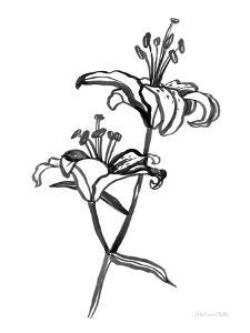 Ink Lilies I by Sara Zieve Miller