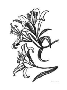 Ink Lilies II by Sara Zieve Miller