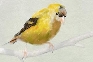 Goldfinch by Sarah Butcher