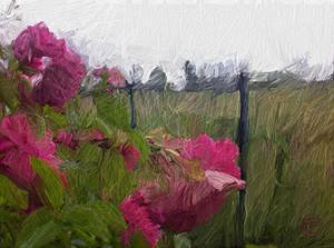 Monet View by Sarah Butcher