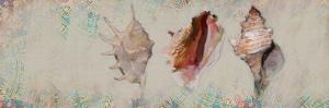 Shells by Sarah Butcher