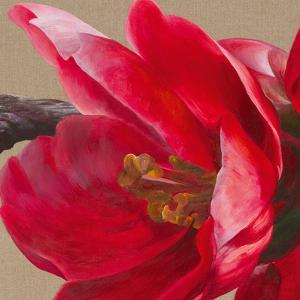 Japonica Blush II by Sarah Caswell