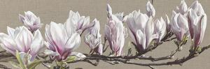 Magnolia Swathe by Sarah Caswell