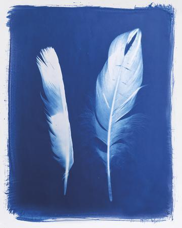 Swan and Magpie Feathers