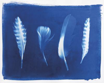 Woodland Bird's Feathers