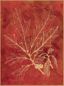Golden Oak I by Sarah Chilton