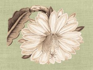 Regencé Lily II by Sarah Chilton