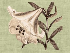 Regencé Lily III by Sarah Chilton