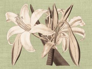 Regencé Lily IV by Sarah Chilton