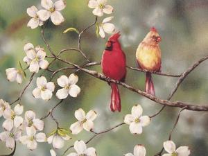 Cardinals by Sarah Davis