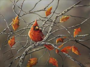 Fall Cardinal by Sarah Davis