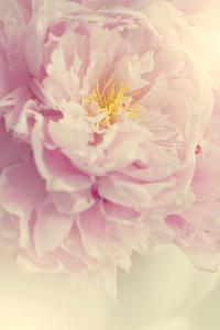 Angelic Petals by Sarah Gardner