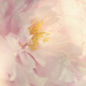 Bloom by Sarah Gardner
