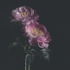 Dark Florals by Sarah Gardner