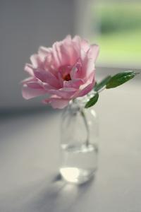 Evening Blooms by Sarah Gardner