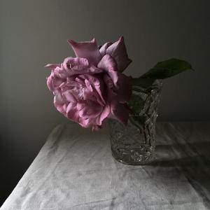 Florals In The Dark by Sarah Gardner